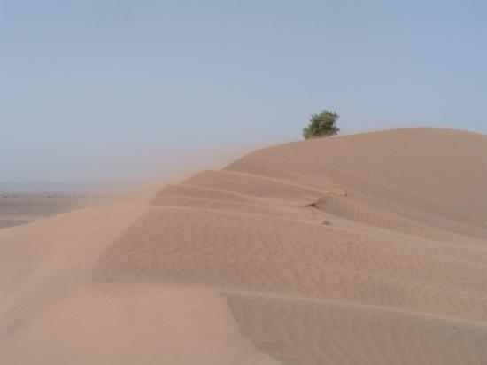 Haute dune de boudib